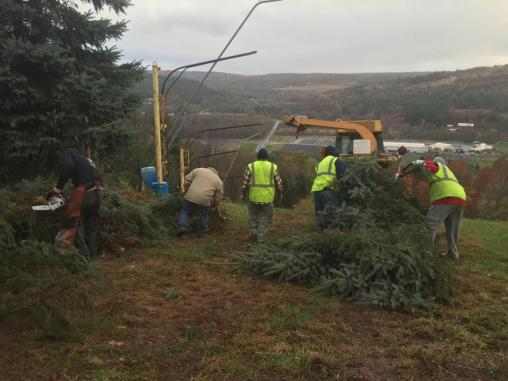 Nick H. and crew clear trees from obstructing electrical wires and snow guns.