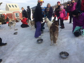 Sled dogs!